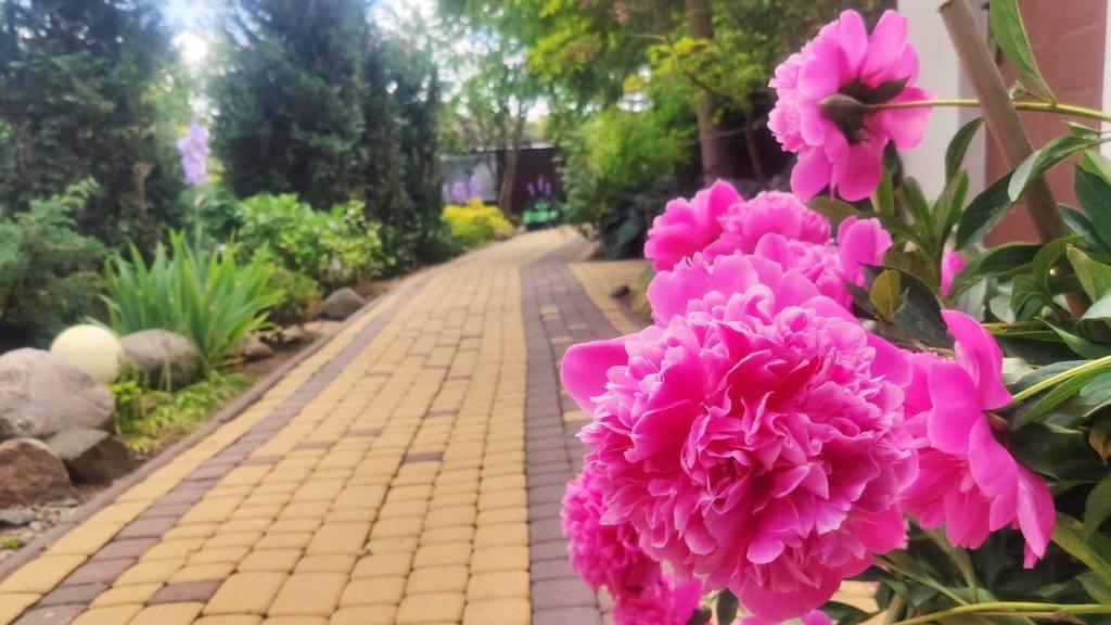 kwiat na drodze